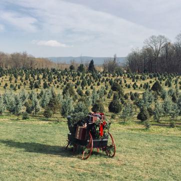 Moose Apple Tree Farm in Berryville, VA